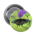 Black Butterfly Templete Items Pinback Buttons