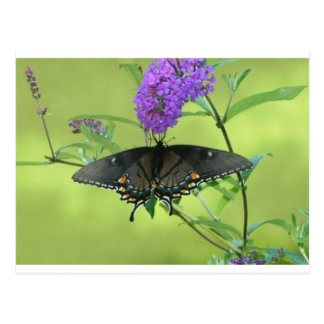 Black Butterfly Templete Items Postcard