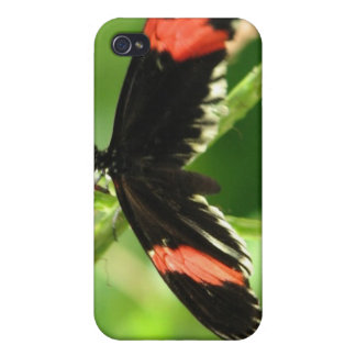 Black Butterfly with Pink iPhone 4 Case
