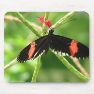 Black Butterfly with Pink Mouse Pad
