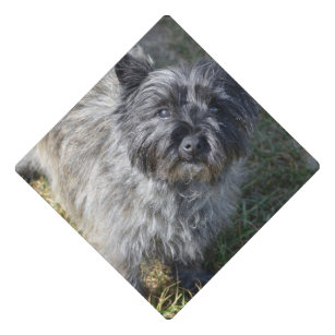 Simple Graduation Cap Black Adorable Dog - black_cairn_terrier_graduation_cap_topper-r8eee9c2d49d74c42a011da84965d83df_z5dko_307  2018_496426  .jpg?rlvnet\u003d1