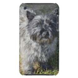 Case-Mate iPod Touch Barely There Case with Cairn Terrier Phone Cases design