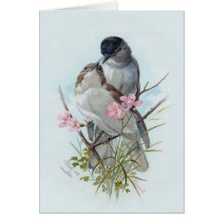 Black Cap Warblers Greeting Card