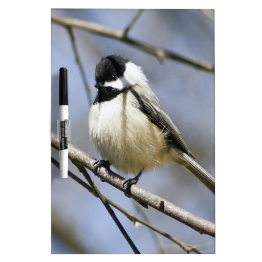 Black Capped Chicadee Dry-Erase Boards
