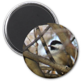 Black-capped Chickadee 2 Inch Round Magnet