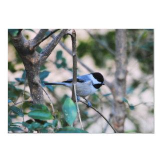 Black Capped Chickadee Backyard Bird Card