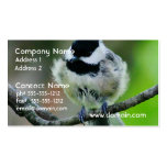 Black Capped Chickadee Bird Double-Sided Standard Business Cards (Pack Of 100)