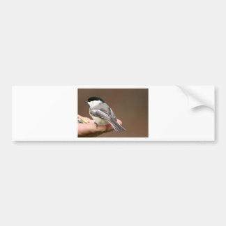 Black Capped Chickadee Bumper Sticker