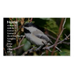 Black-capped chickadee business card