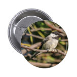 Black-capped Chickadee Buttons