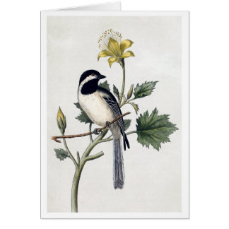 Black-capped Chickadee Cards