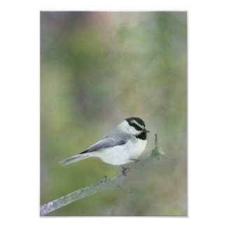 Black Capped Chickadee Digital Painting Poster