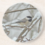 Black-Capped Chickadee in Snow Storm Sandstone Coaster