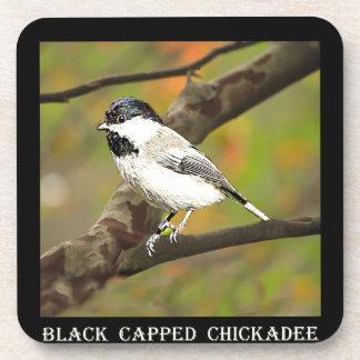 Black Capped Chickadee (Maine and Massachusetts).j Drink Coasters