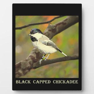 Black Capped Chickadee (Maine and Massachusetts).j Plaque