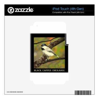 Black Capped Chickadee (Maine and Massachusetts).j iPod Touch 4G Decal