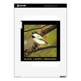 Black Capped Chickadee (Maine and Massachusetts).j Skins For The iPad 2