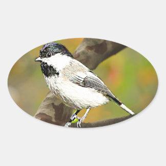 Black Capped Chickadee (Maine and Massachusetts).j Oval Sticker