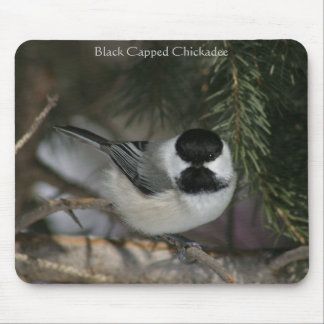 Black Capped Chickadee Mousepad