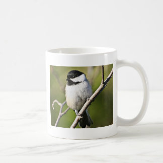 Black-capped chickadee coffee mugs