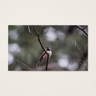 Black Capped Chickadee on Branch Business Card
