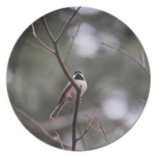 Black Capped Chickadee on Branch Plate