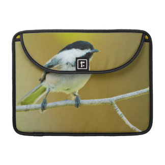Black-Capped Chickadee Perched In Cottonwood MacBook Pro Sleeve