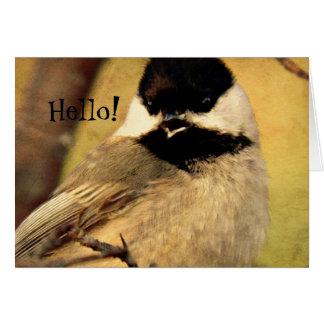 Black Capped Chickadee Photo Card