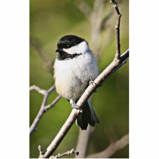 Black-capped chickadee cut outs