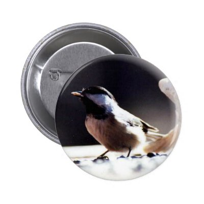 Black Capped Chickadee Pinback Button