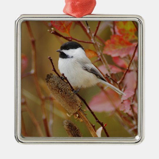 Black-capped Chickadee, Poecile atricapilla, Metal Ornament