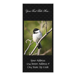 Black-capped chickadee rack card
