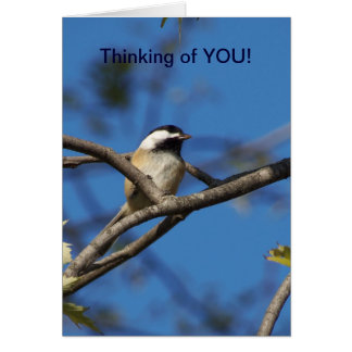 Black-capped Chickadee, Thinking of You Card