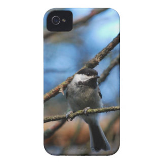 Black-Capped Chickadee Wraps Toes Around Narrow Tw Case-Mate iPhone 4 Case