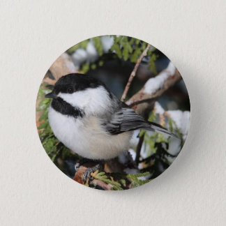 Black-capped Cickadee Pinback Button