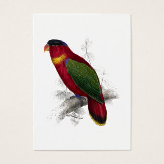 Black-Capped Lory by Edward Lear Business Card