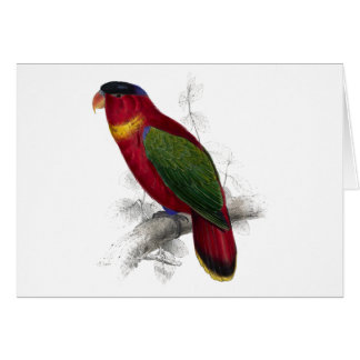 Black-Capped Lory by Edward Lear Card