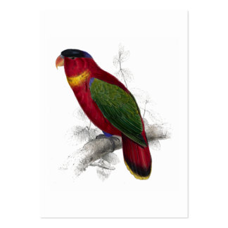 Black-Capped Lory by Edward Lear Large Business Card