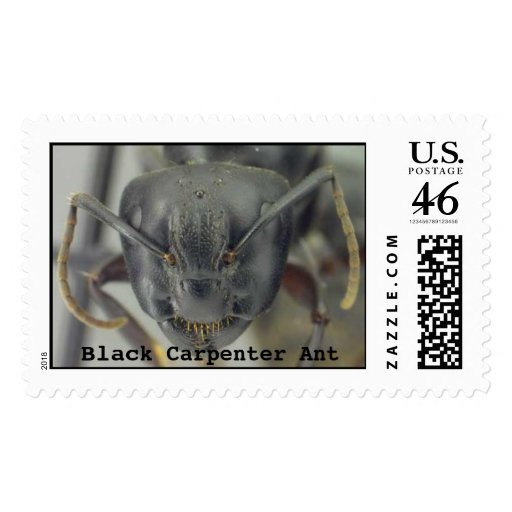 Black Carpenter Ant Postage Stamps