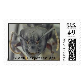 Black Carpenter Ant Stamp