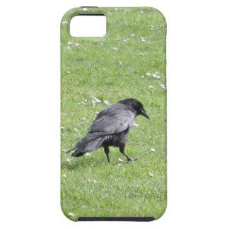Black Carrion Crow iPhone SE/5/5s Case