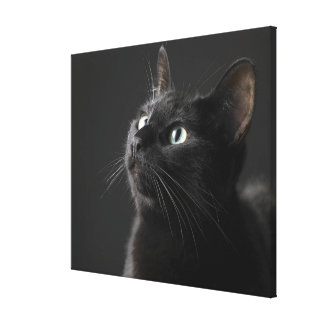 Black cat against black background close-up stretched canvas print