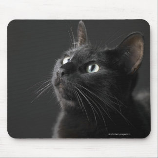 Black cat against black background, close-up mouse pad