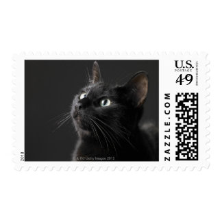 Black cat against black background, close-up postage
