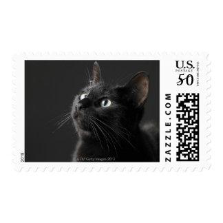 Black cat against black background, close-up postage