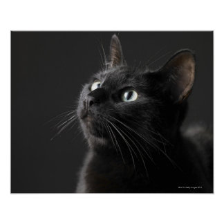 Black cat against black background, close-up poster