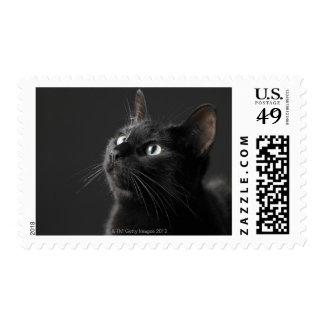 Black cat against black background, close-up stamp