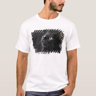 Black cat against black background, close-up T-Shirt
