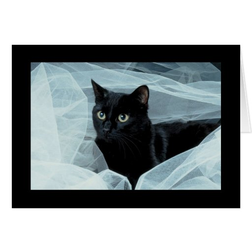 Black Cat All Occasion Card