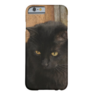Black Cat, Amber Eyes, Earth Tones Textured Back Barely There iPhone 6 Case